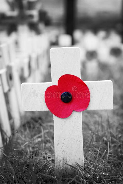 Poppy Cross, Remembrance Day Display Stock Photo - Image