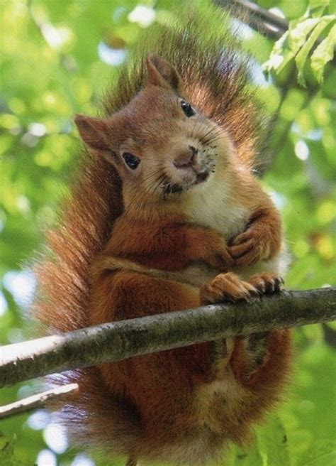 20 Photos Showing Why Squirrels Are Awesome