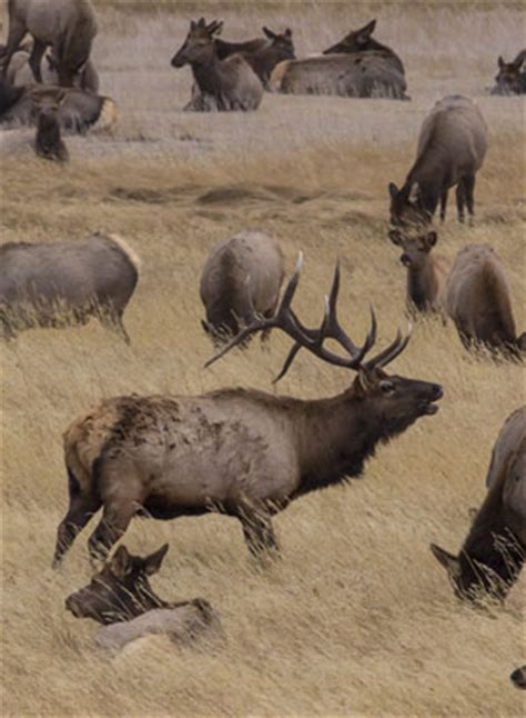 Area Closures to Protect Plants & Animals - Rocky Mountain